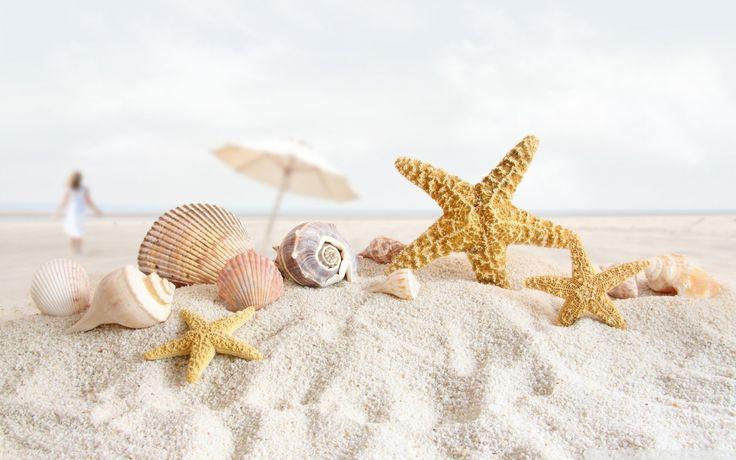seashell wallpaper 25189