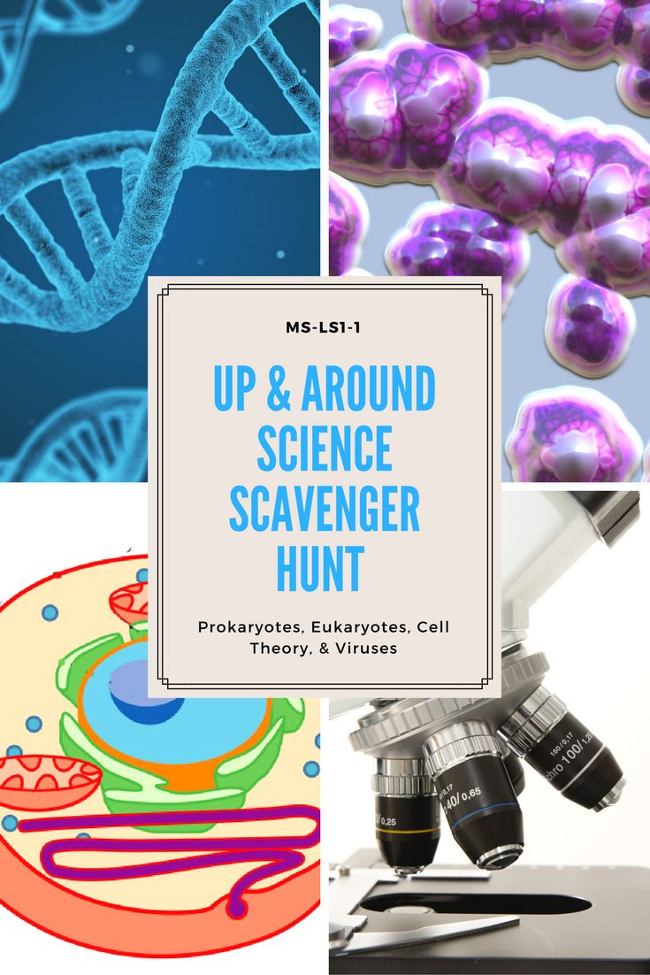 Up & Around Science Scavenger Hunt: Cells. Aligns with NGSS MS-LS1-1 A review game covering prokaryotes, eukaryotes, the cell theory, microscope parts, and viruses.