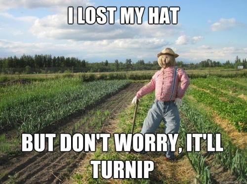 Image result for lost hat joke