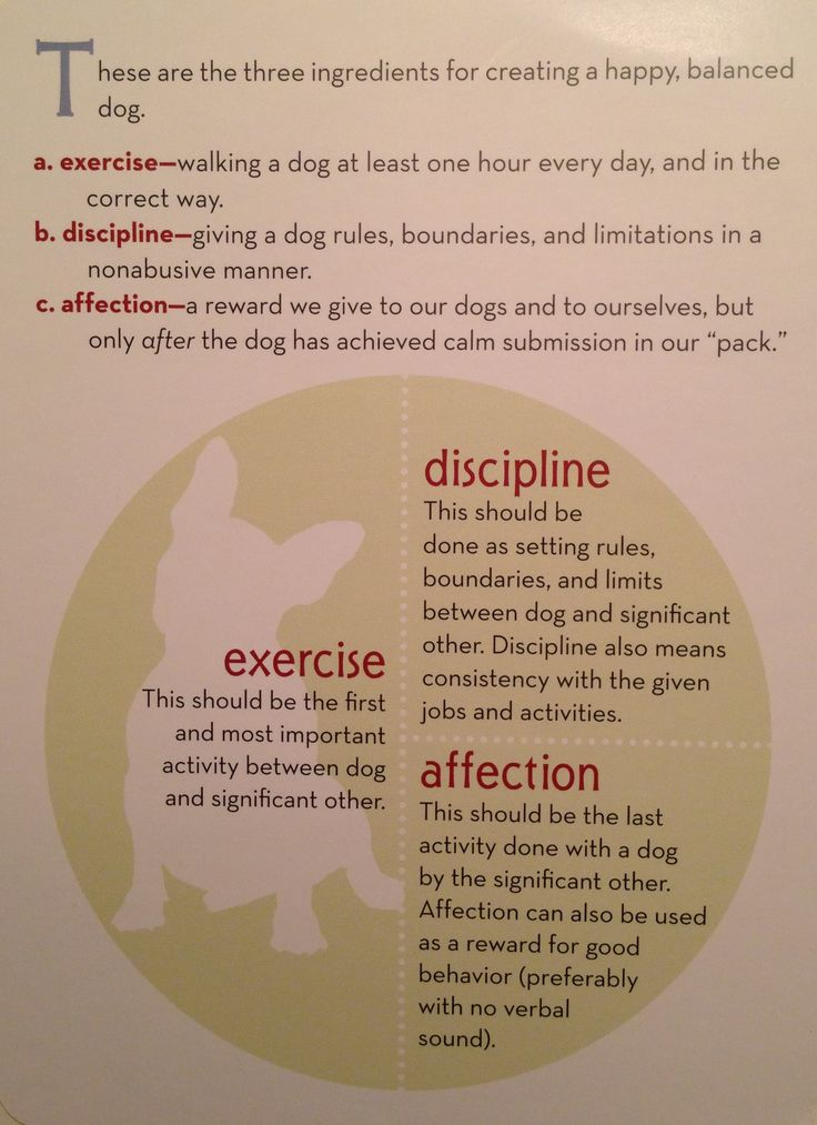 Cesar's way - three ingredients for creating a happy, balanced dog: exercise, discipline, affection.