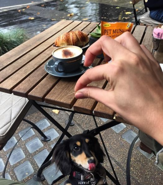Looks like Winston is enjoying his breakfast at our restaurant in Hyde Park. 📸 winstonminidachshund