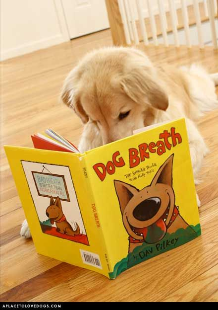 a fascinating read...: Funny Books, Kids Books, Therapy Dogs, Dogs Breath, Cute Pet, Reading Books, Animal Reading, Animal Awwwww, Golden Retriever Puppies