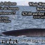 ¡Avistamiento de Ballenas este sábado con Eco Fun Puerto Peñasco!