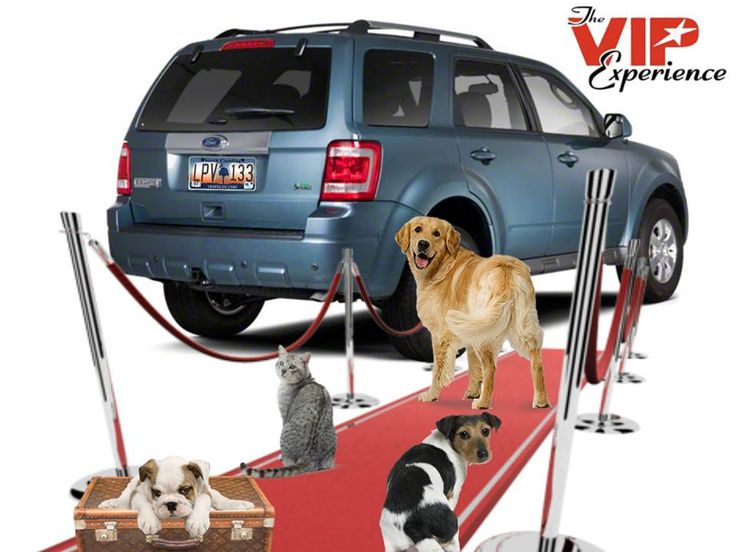 cozy pet taxi ;  coast to coast pet shipping with pet taxi  http://www.helpingapet.com