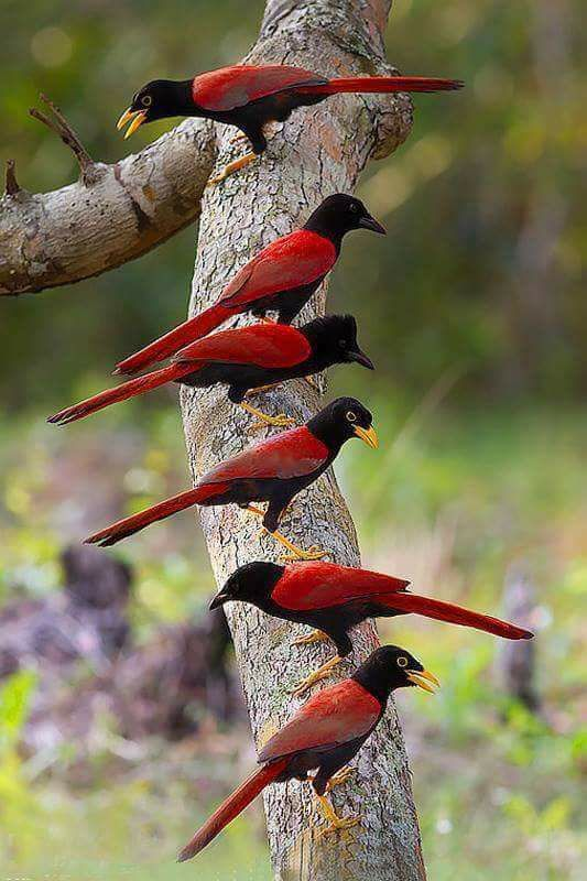 Lovely exotic birds