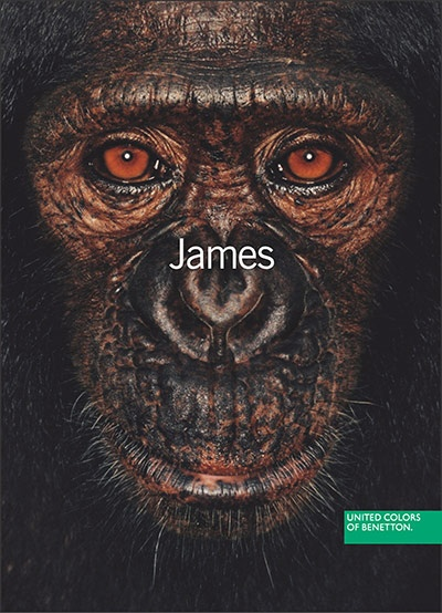 Benetton adverts: James and other apes: 2004.