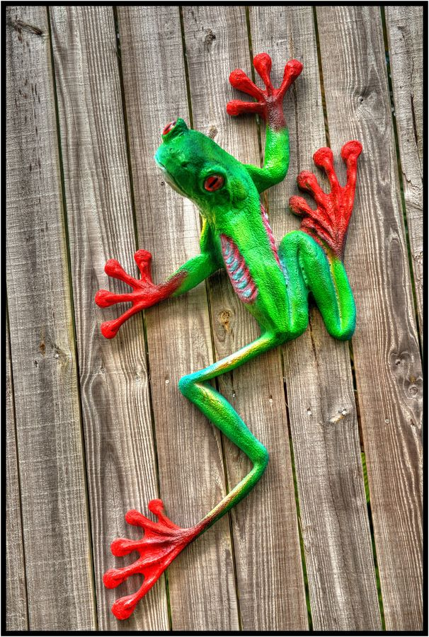 Red tree frog | Awesome Design Inspiration #animals