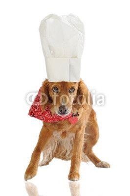 Cagnolina chef con bandana rossa