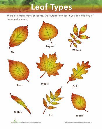 Worksheets: Leaf Types