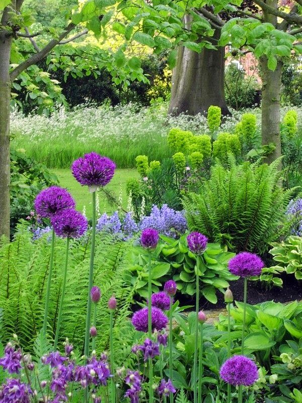 Alliums, ferns, hostas, aquilegia, foxgloves and euphorbia.