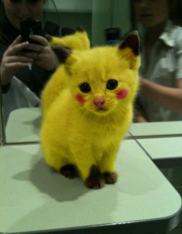 Photos chats trop mignons - Chat tout mignon ...