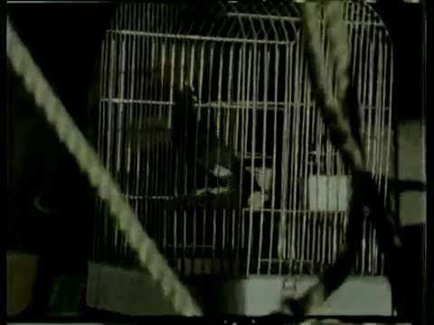 Kıraç - Talihim Yok Bahtım Kara (Official Video)