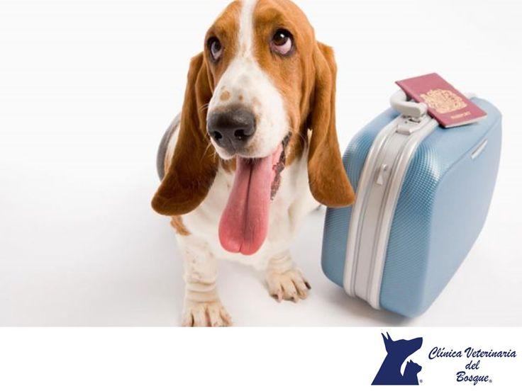 https://flic.kr/p/P5VAQX | Saldré de viaje con mi mascota. CLÍNICA VETERINARIA DEL BOSQUE 1 | Saldré de viaje con mi mascota. CLÍNICA VETERINARIA DEL BOSQUE. Si planeas viajar con tu mascota en avión, es fundamental que consultes las condiciones de la aerolínea para el transporte de animales. Generalmente, solicitan certificados de vacunación, constancias de salud firmadas por un veterinario con su Cédula profesional y otros documentos que debes tramitar con anticipación. En Clínica…