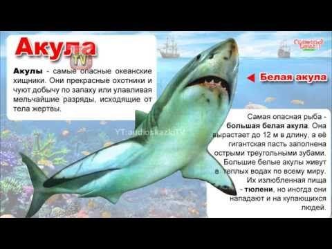 Энциклопедия для детей. Акулы, рыба-молот, альбатрос.