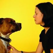 How to Make Natural Flea Shampoo for Dogs | eHow