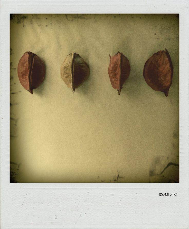 IL GIRO DELLE FOGLIE Seguono diversi gesti di raccolta, messi a strati come il tempo, che sfoglia pagine sempre più oblique, pesanti.  Portare all'altro i polmoni, per svuotare dall'aria, e io comunque aspetterò il giro delle foglie, mentre resteranno appesi alla spalliera i nostri duetti.   http://paralleluniverseinpolaroid.wordpress.com