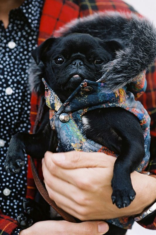 Best accessory ever. Photo by Vanessa Jackman. Details in street style