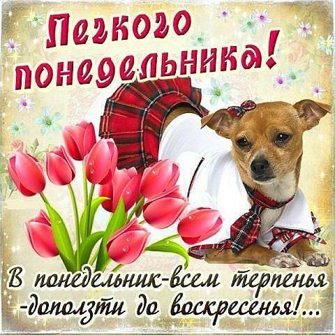 Друзья, всем доброе утро! Легкого понедельника! Удачной недели! Хорошего дня! pic.twitter.com/rH55oQJ75k