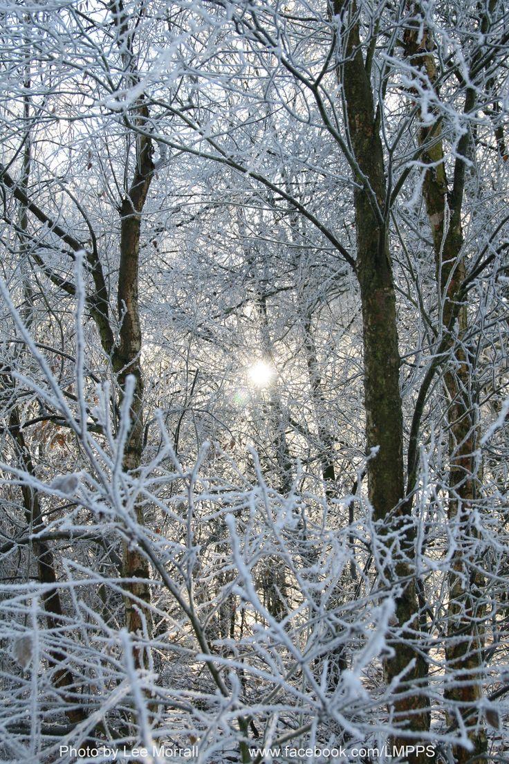 Hoar frost on Hednesford Hills, Staffordshire, December 2010.
