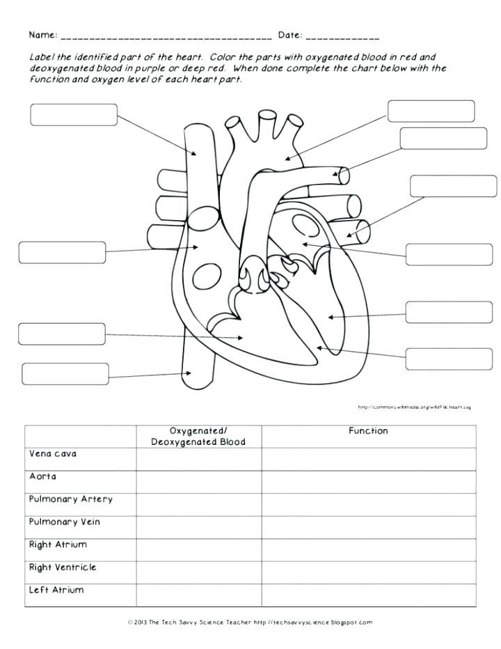 A Circulatory System Human Body Anatomy Science Video For Middle Life Worksheets For Preschool Alph Human Body Worksheets Body Systems Worksheets Heart Diagram