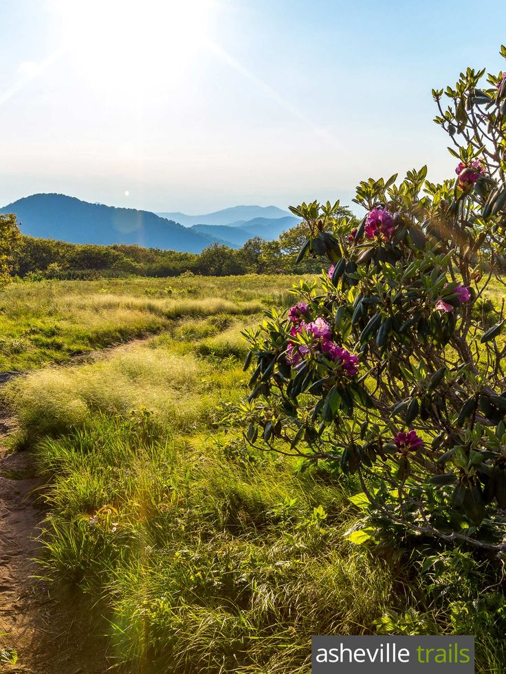 Hike to a blissful, sun-drenched, grassy summit on the Craggy Gardens Trail off the Blue Ridge Parkway