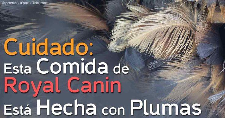 """El alimento de plumas de pollo y almidon de maíz son algunos de los ingredientes presentes en la formula """"allergenic"""" del alimento para perros de Royal Canin. http://mascotas.mercola.com/sitios/mascotas/archivo/2014/10/09/alimentos-para-mascota-hechos-con-plumas.aspx"""
