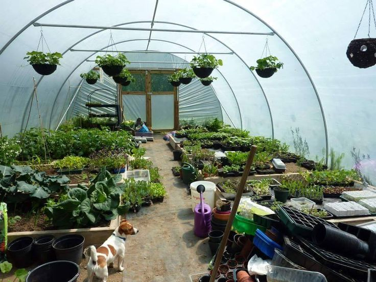 Do I need a Polytunnel? - Dplant.ie