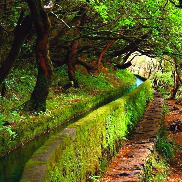 The Levadas at Madeiras  http://www.travelandtransitions.com/destinations/destination-advice/europe/madeira-portugal/