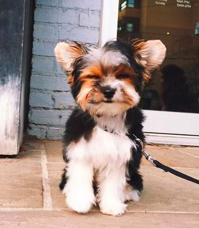 pinterest: scatterbrainedd - Tap the pin for the most adorable pawtastic fur baby apparel! You'll love the dog clothes and cat clothes! <3