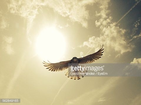 Stock-Foto : Low Angle View Of Eagle Flying