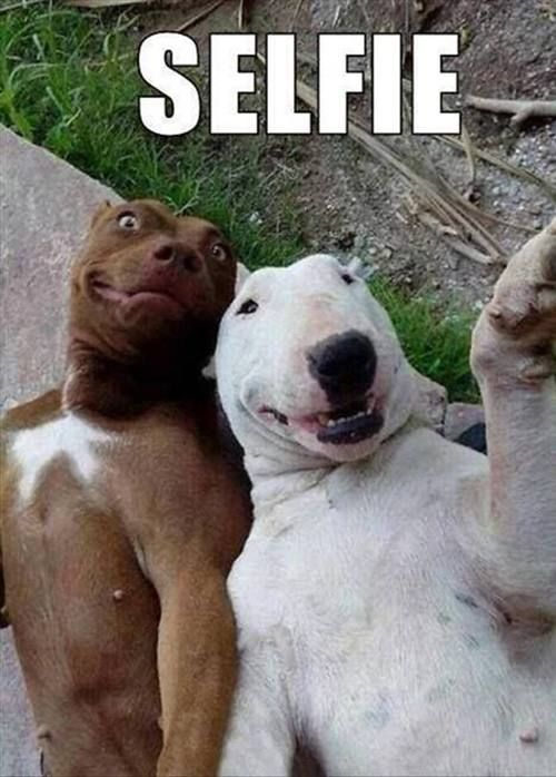 funny selfies | funny-selfies-15 : theBERRY