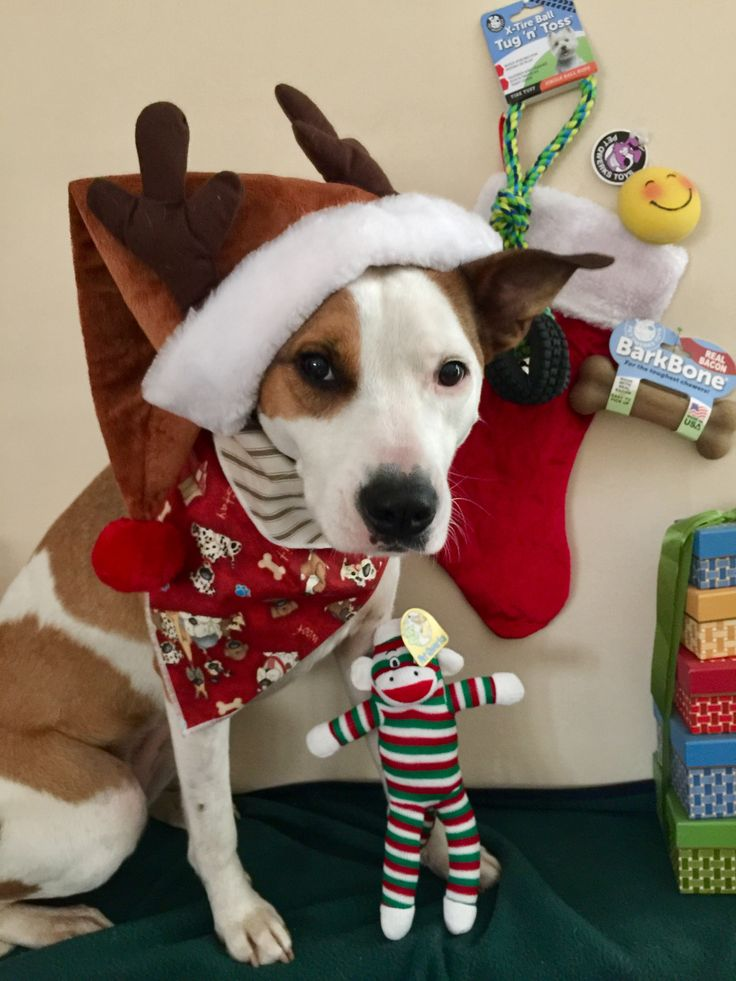 Stocking stuffers for your dog