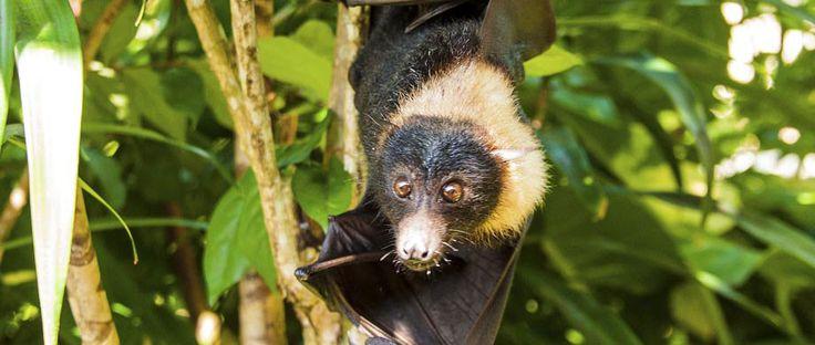 Matangi Island Bats Private Island Resort Island Resort Private Island