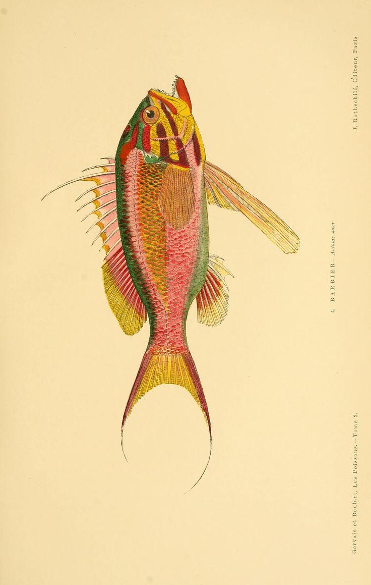 2 - Les poissons : - Biodiversity Heritage Library