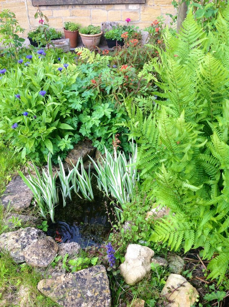 Small Garden Pond Ideas find this pin and more on gardening ideas create a relaxing garden pond Small Garden Pond