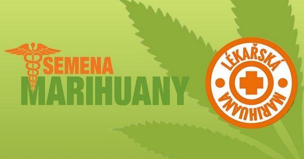 Semena léčebného konopí. Lékařská marihuana léčí řadu onemocnění, jiné tlumí. Prodej semen lékařské marihuany. Dostupná léčba konopím pro nemocné