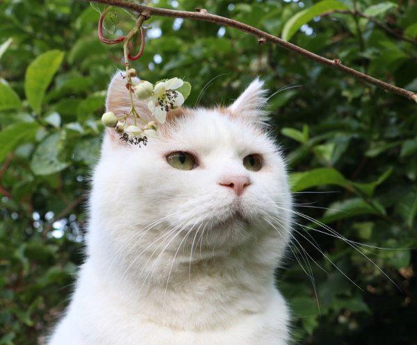2017.07.13 サルナシの花