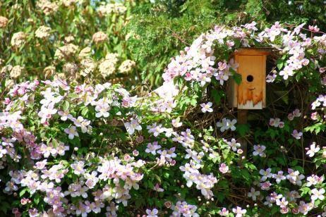 Enredaderas que crecen rápido para tu jardín o balcón