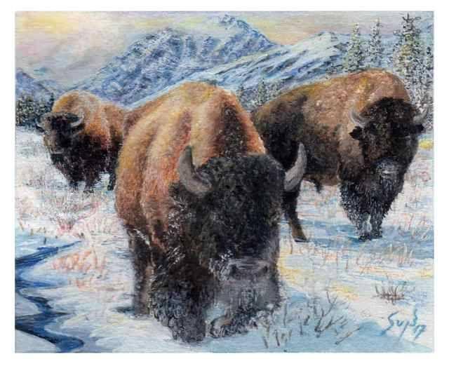 Buffaloes in Winter