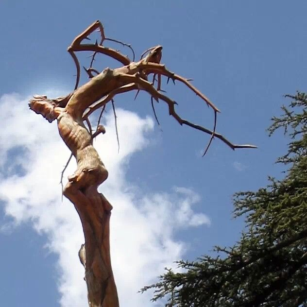 Image result for the Jesus tree