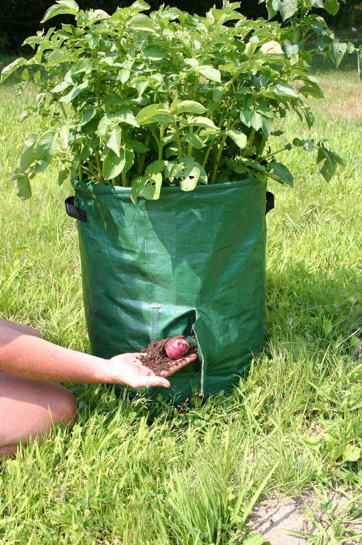 Potato Tubs (2)
