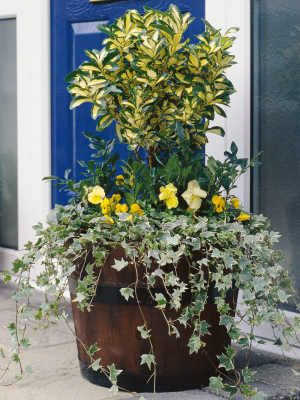 Protecting container plants in the winter.  Tips to keep in mind when planting containers this spring.