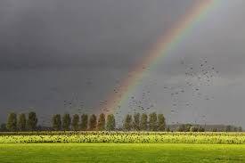 Afbeeldingsresultaat voor zwerm vogels