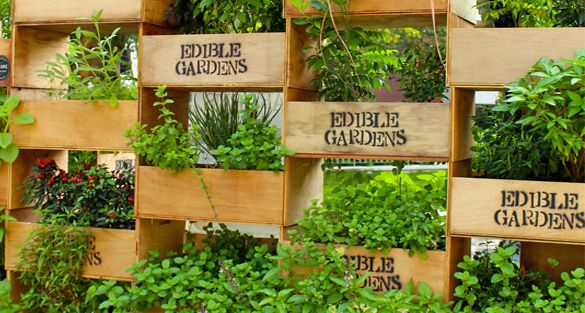 Edible Garden Ideas schaffers genuine foods created an edible garden for a youtube event at the museum of flying in Garden Design With Edible Garden Garden Ideas Pinterest Edible Garden Garden With Beautiful Landscaping Pictures