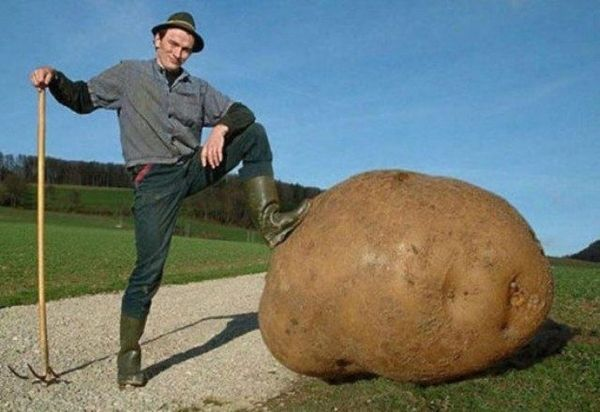 I bet you've never seen a potato this huge. Now look at all these other giant fruits and veggies!