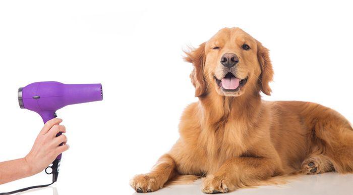 Son muchos losbeneficios que la peluquería caninaaporta a nuestros perros, Miki Lluch, de Boppin Box Grooming Formación, nos cuenta lo importante que esentender la estructura de cada raza, para sacarle …