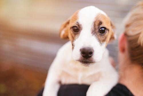 Razones por las que un perro tiembla - Mis animales