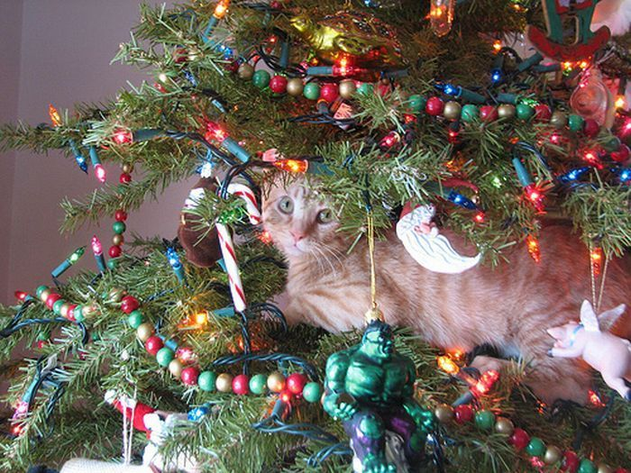 34 best O Christmas tree, O Christmas tree ~ Your ornaments are ...
