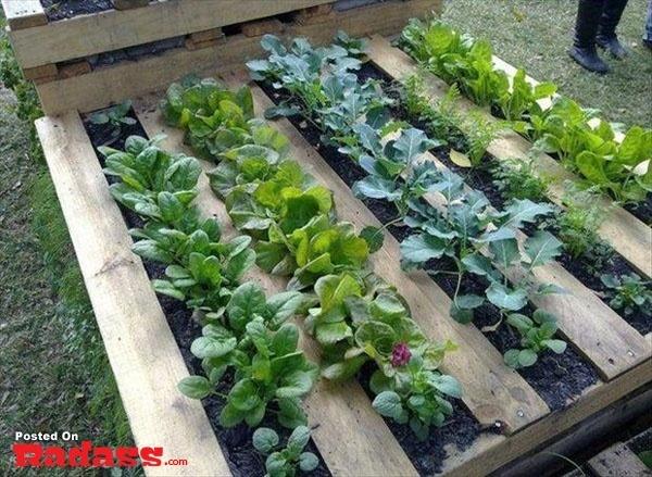 pallette garden rows