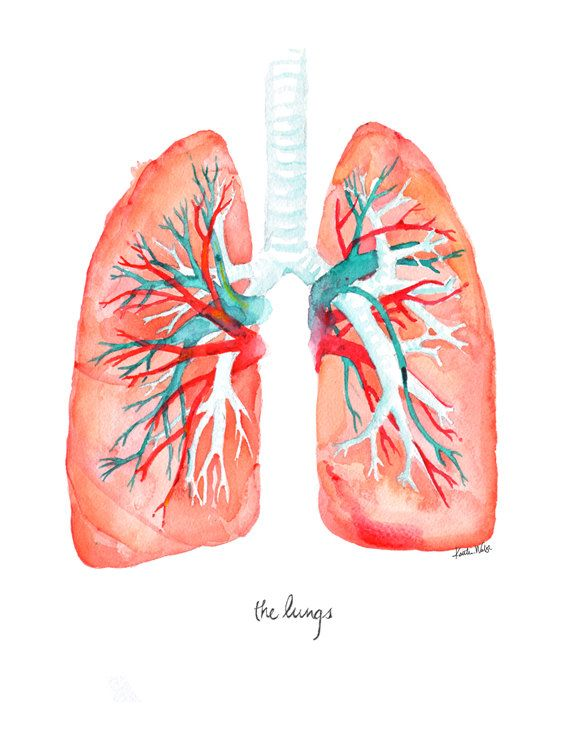 Lungs Art Print Lung Watercolor by LyonRoad on Etsy